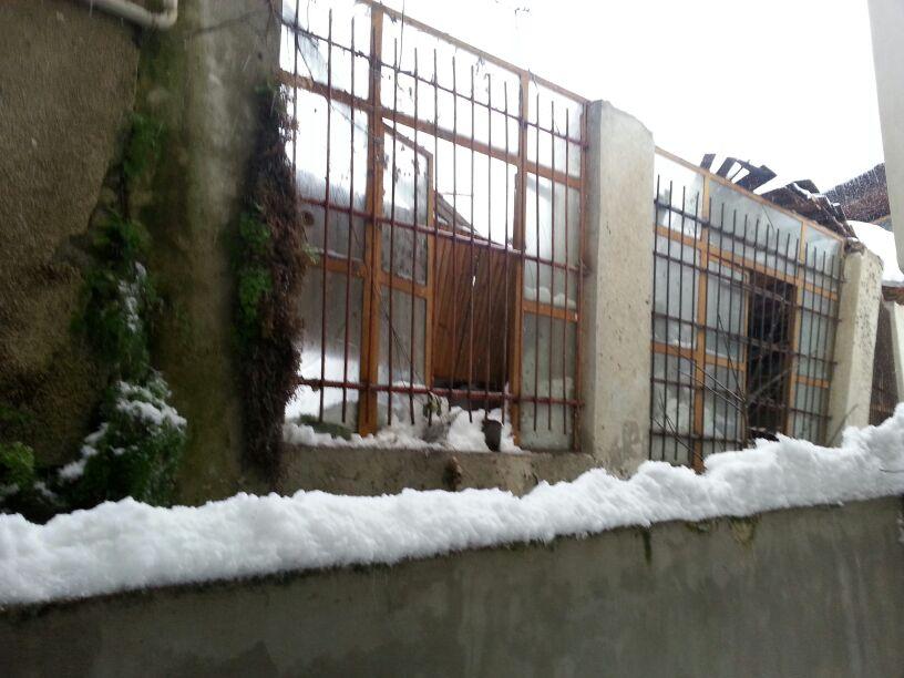 برف تنکابن