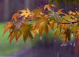 کاهش 25 درصدی بارش آبانماه در مازندران
